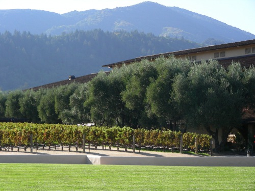 Robert Mondavi Vineyards San Francisco United States Travel Blog