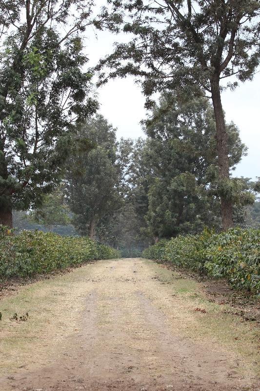 Arusha, Arusha Tanzania