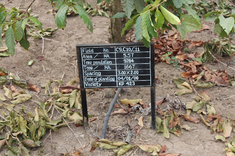 Coffee Plants in Arusha, Tanzania