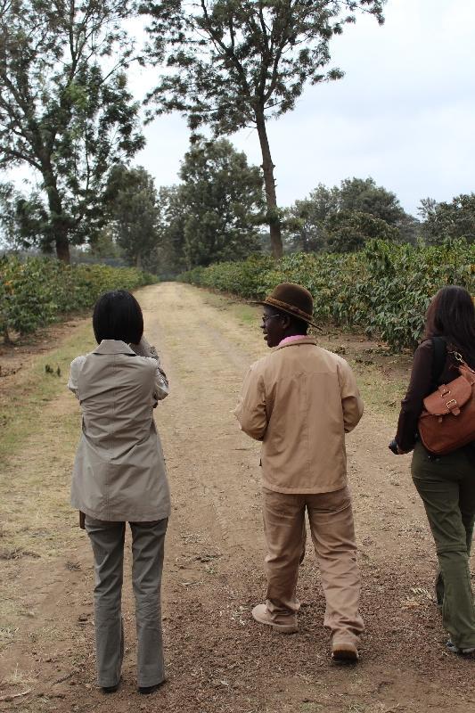 Arabica Coffee Bean Plantation, Arusha Tanzania