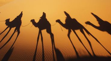 Photo Morocco Camel Trekking
