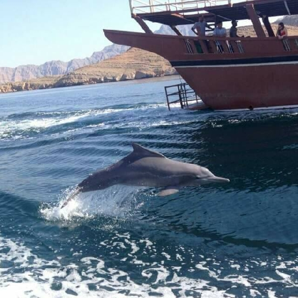 Dhow cruise with dolphin watch Khasab