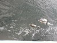 Dolphins in Eden
