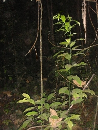 The forests on Ko Similan