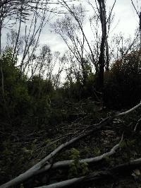 The burned bush land