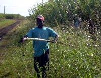 Locals in the sugar cane fields