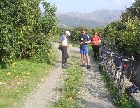 Picking oranges on a cycle tour