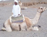 Camel ride tour in the Egyptian desert.