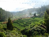 Panoramic photos of the Nilgiri Hills in Kerala, India.