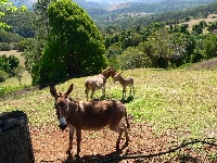 Spa Views Donkeys, Sassy, Tassy and Uri over looking the valley below