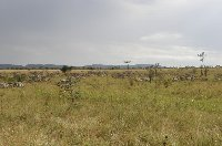 Pictures of the Serengeti National Park in Tanzania