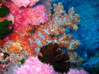 Amazing coral and nudibranches in Palau