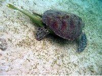 Wildlife pictures Mayotte Island Mamoudzou Travel Blog