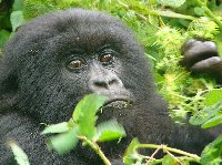 Rwanda Volcanoes National Park Ruhengeri Holiday Review