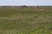 Balloon safari Serengeti Karatu Tanzania Review