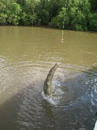 Jumping crocodiles in Darwin Australia Diary Photos