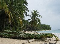 Bocas del Toro on Isla Colon Panama Holiday Pictures