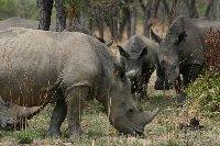 Matobo National Park Zimbabwe Bulawayo Diary Experience