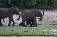 Chobe National Park Botswana Kasane Picture Sharing