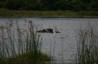 Chobe National Park Botswana Kasane Blog Adventure