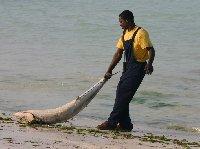 Pongwe Beach Resort Zanzibar Tanzania Travel Adventure