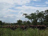 Ziwa Rhino Sanctuary Uganda Nakasongola Diary Pictures