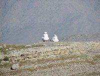Khasab Oman Holiday Photos