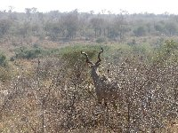 Kruger National Park camping safari Mpumalanga South Africa Vacation Picture