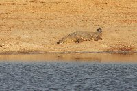 Safari Hwange Zimbabwe Album Photos