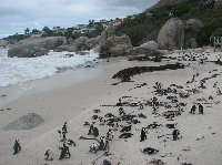 Travel to Cape Town South Africa Review Picture