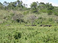 Tanzania safari holiday in Arusha Review