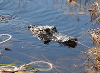 Everglades National Park Boat Tour United States Holiday Adventure