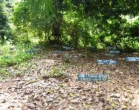Orphanage Volunteer Project in Ghana Nkoranza Blog Pictures