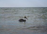 Flamingo Tour in Yucatan Mexico Celestun Blog Photos