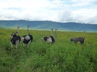 Tanzania Wildlife Safari Tarangire National Park Vacation Experience