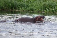 Uganda Safari Murchison Falls NP Lolim Blog Review