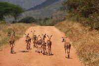 Kenya Tours and Safaris Tsavo Photography