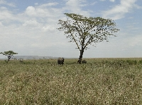 Serengeti Tanzania Fly540 Zanzibar Arusha Travel Diary