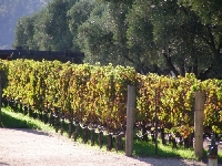 Robert Mondavi Vineyards San Francisco United States Blog Pictures