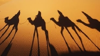 Morocco Camel Trekking Marrakesh Travel Experience