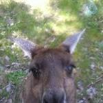 Dunsborough Australia Eye to eye