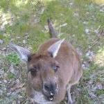 Feeding the roo's