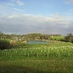 Margaret River Australia The Vineyard