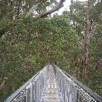 Walpole Australia Tree Top Walk