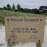 Kangaroo Island Australia Penguin rookery Penneshaw