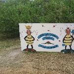 Kangaroo Island Australia Cute bees