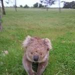 Koala moment..