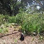 Cleland Hills Australia Tassie