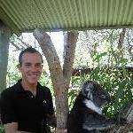 Koala shoot