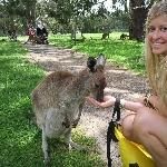 Feeding the roos